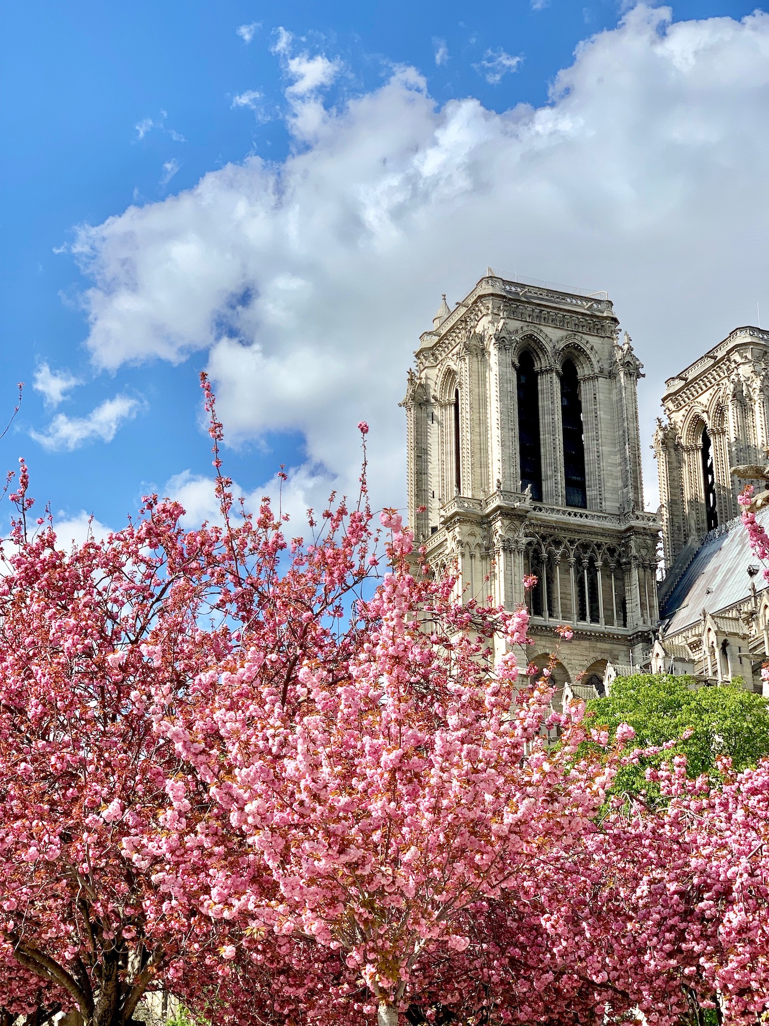 Notre Dame in April 2019