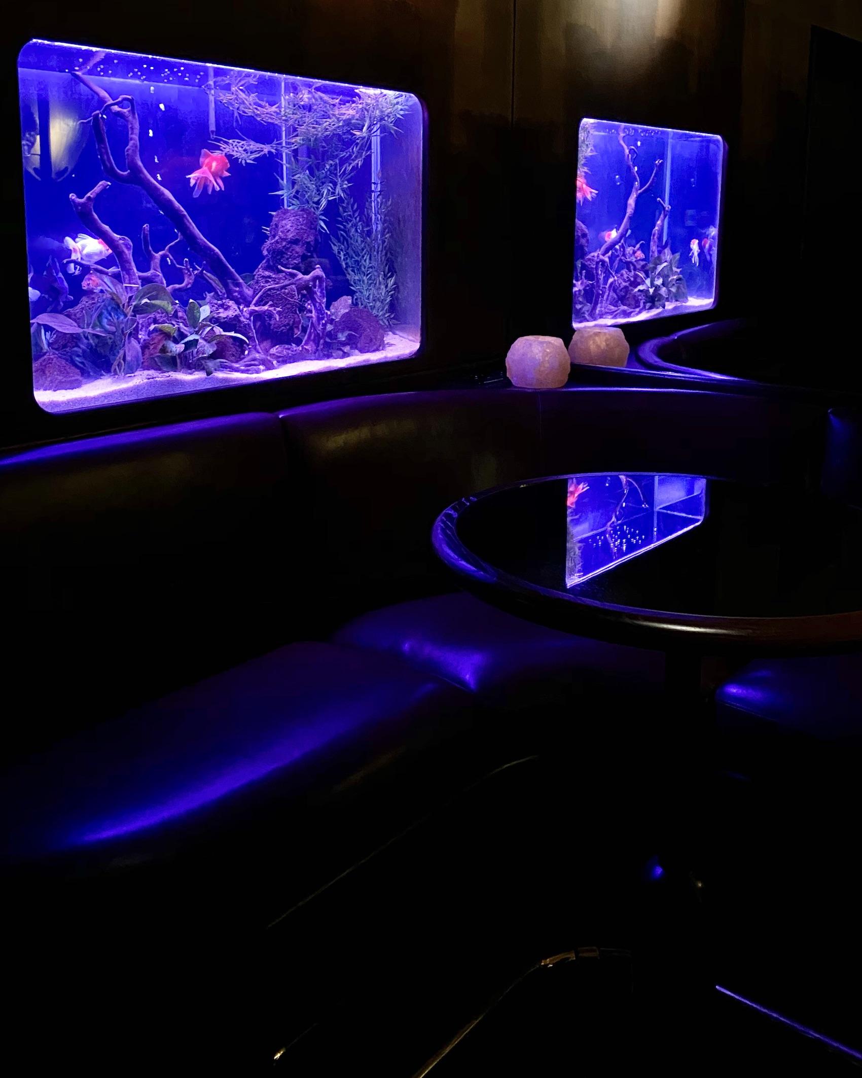 Fish Tank at Dragon on Rue du Dragon