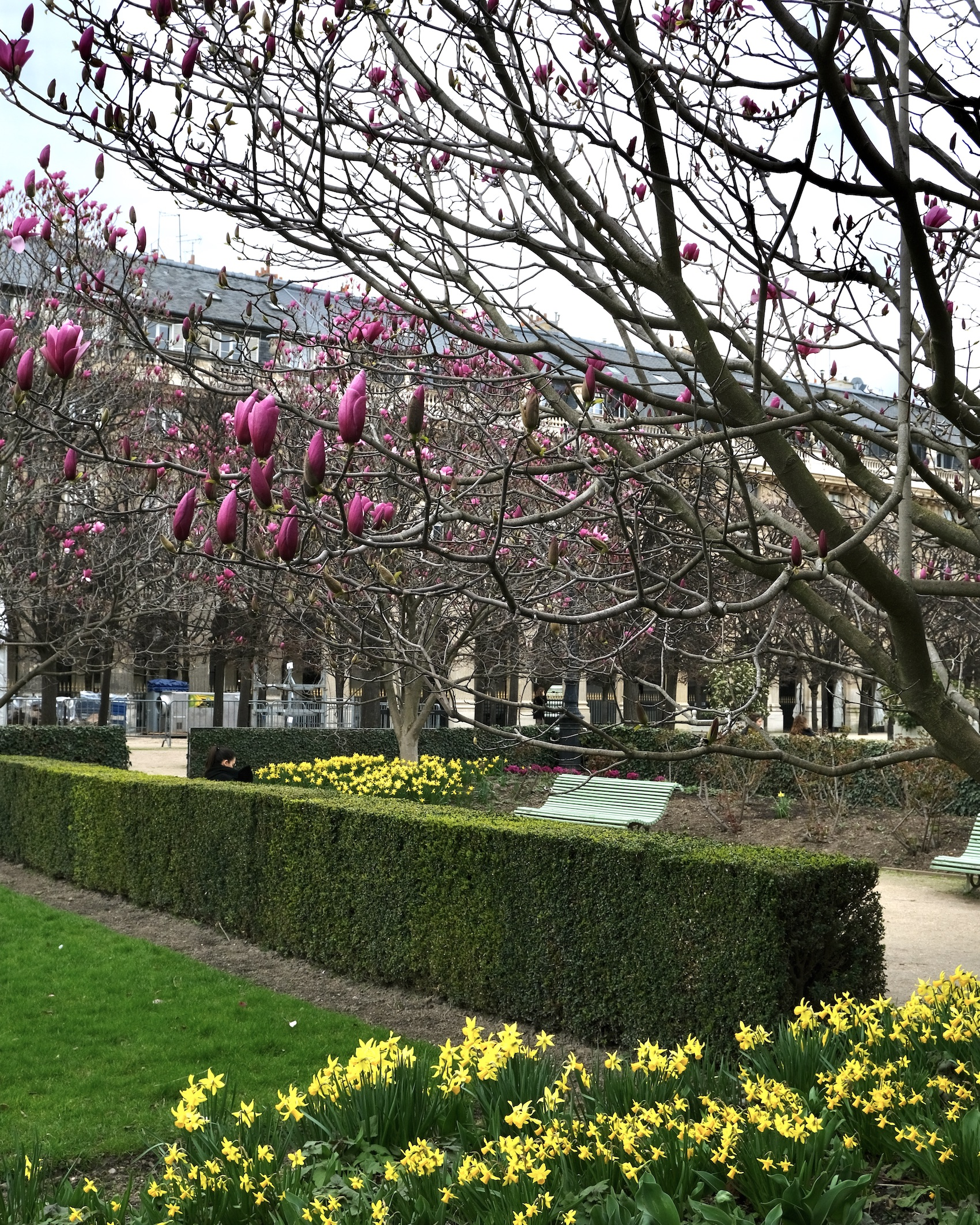 Early Spring Flowers in Paris at the Palais Royal
