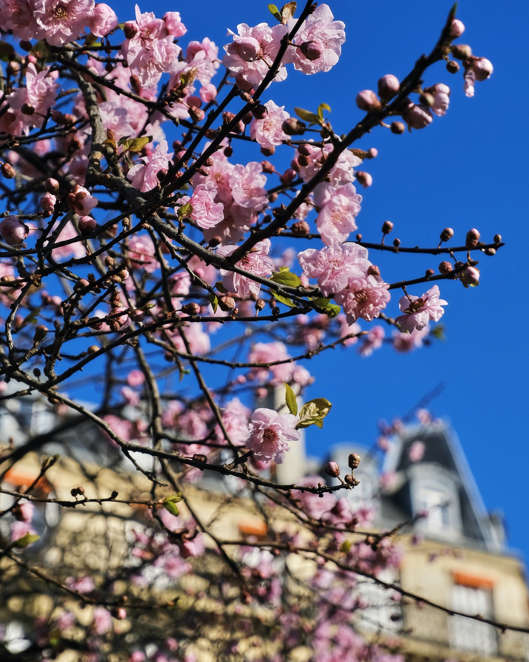 Earliest Spring Flowers in Paris at Square Boucicaut