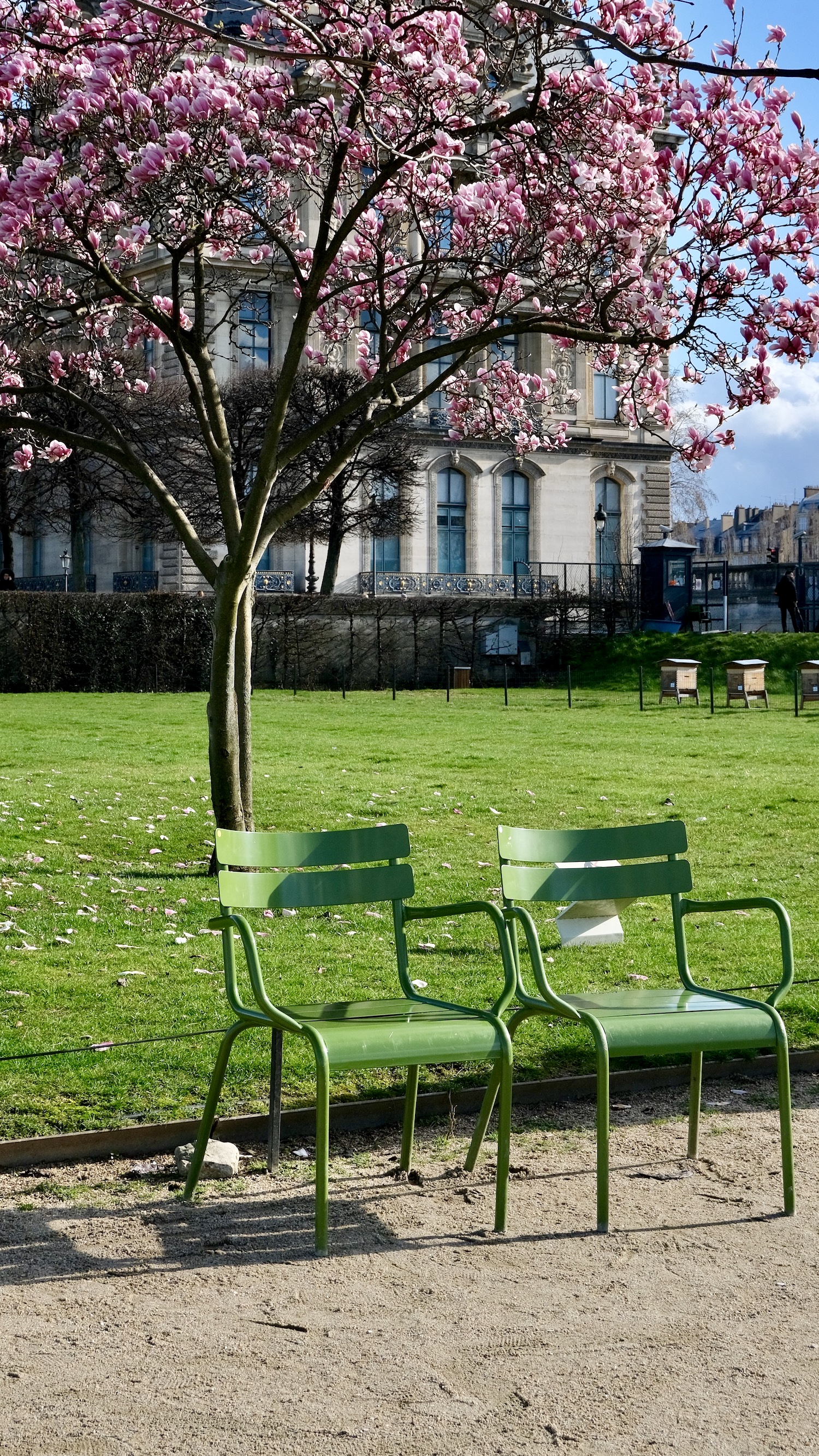Green Chairs with Magnolia Blooms at the Tuileries