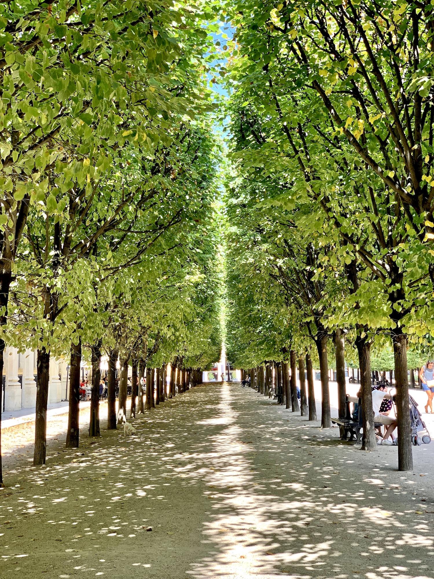 Summer walk in the Palais-Royal Garden in Paris