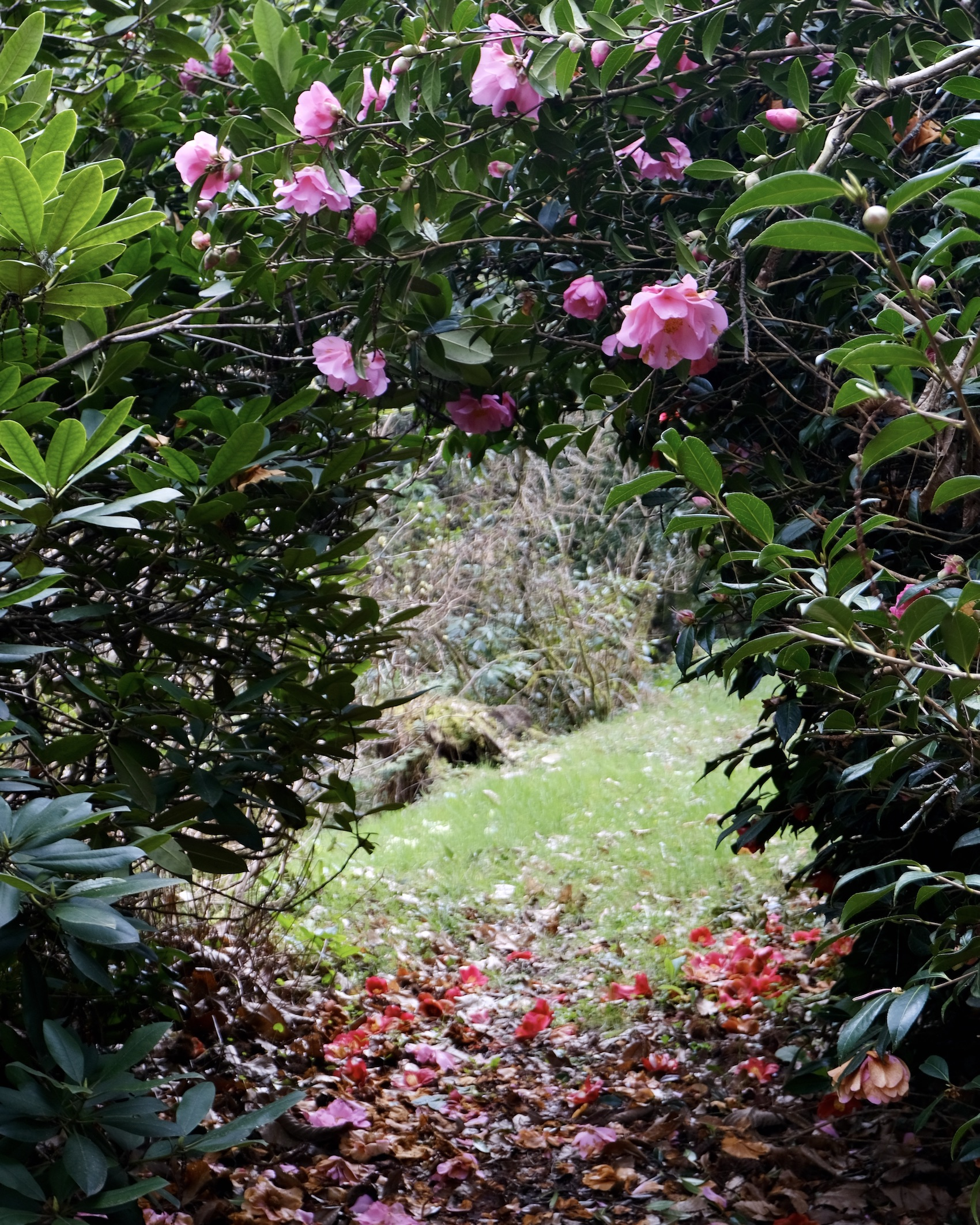 Normandy garden walks