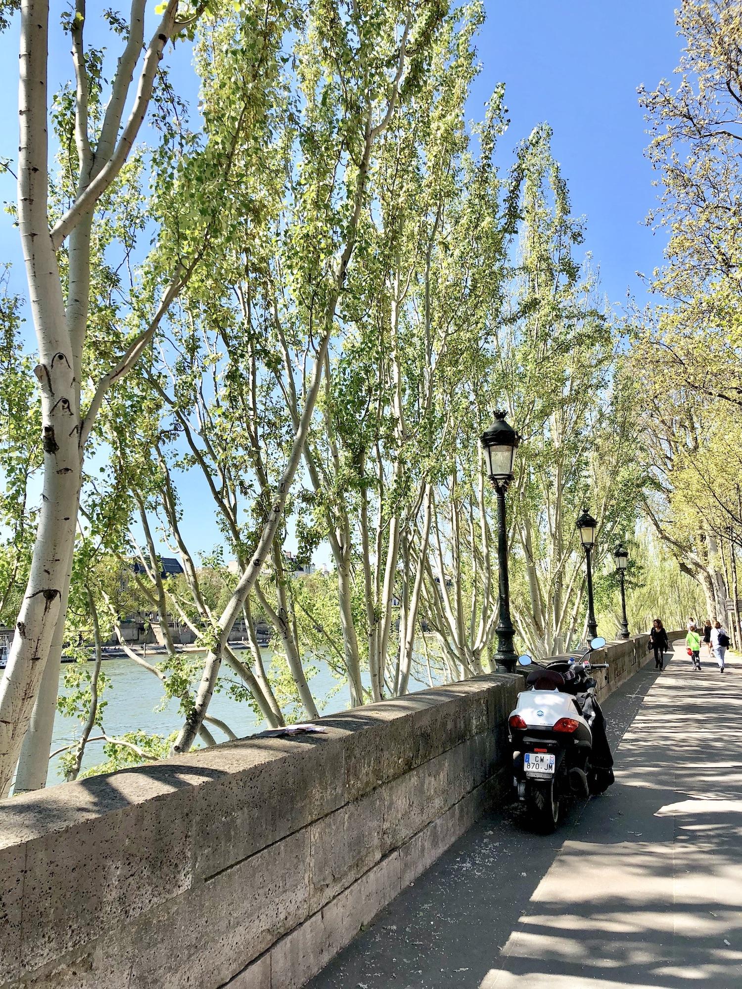 April in Paris along the Seine