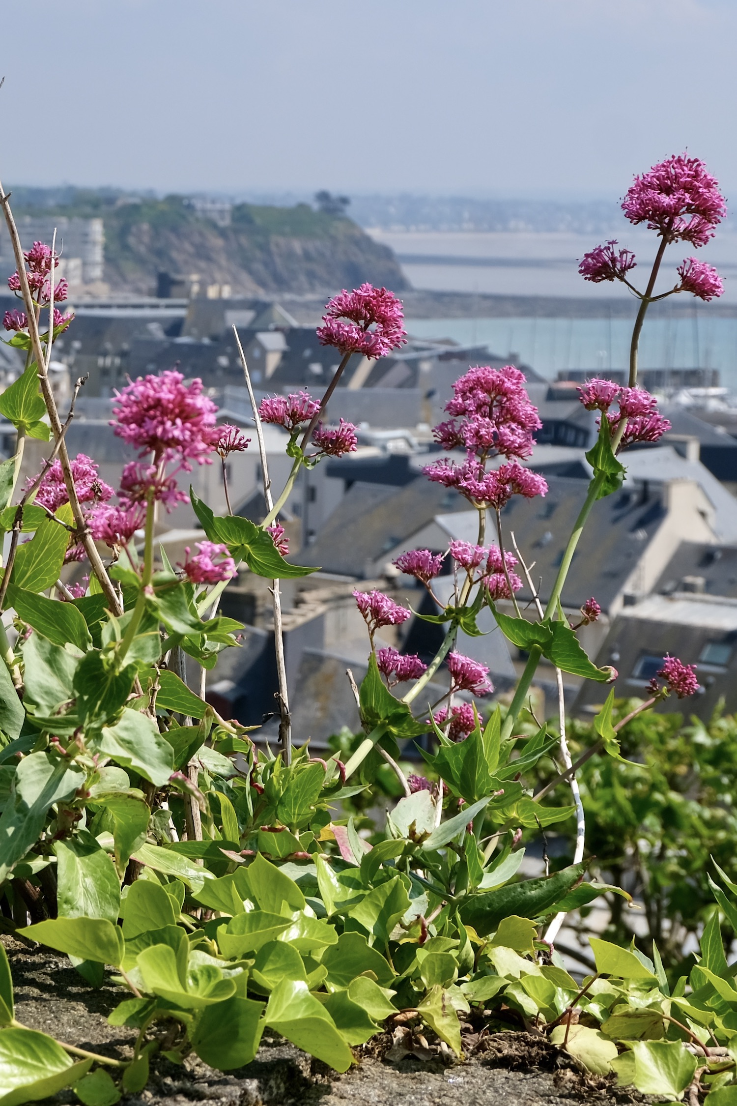 Confinement week eight in Normandy Granville