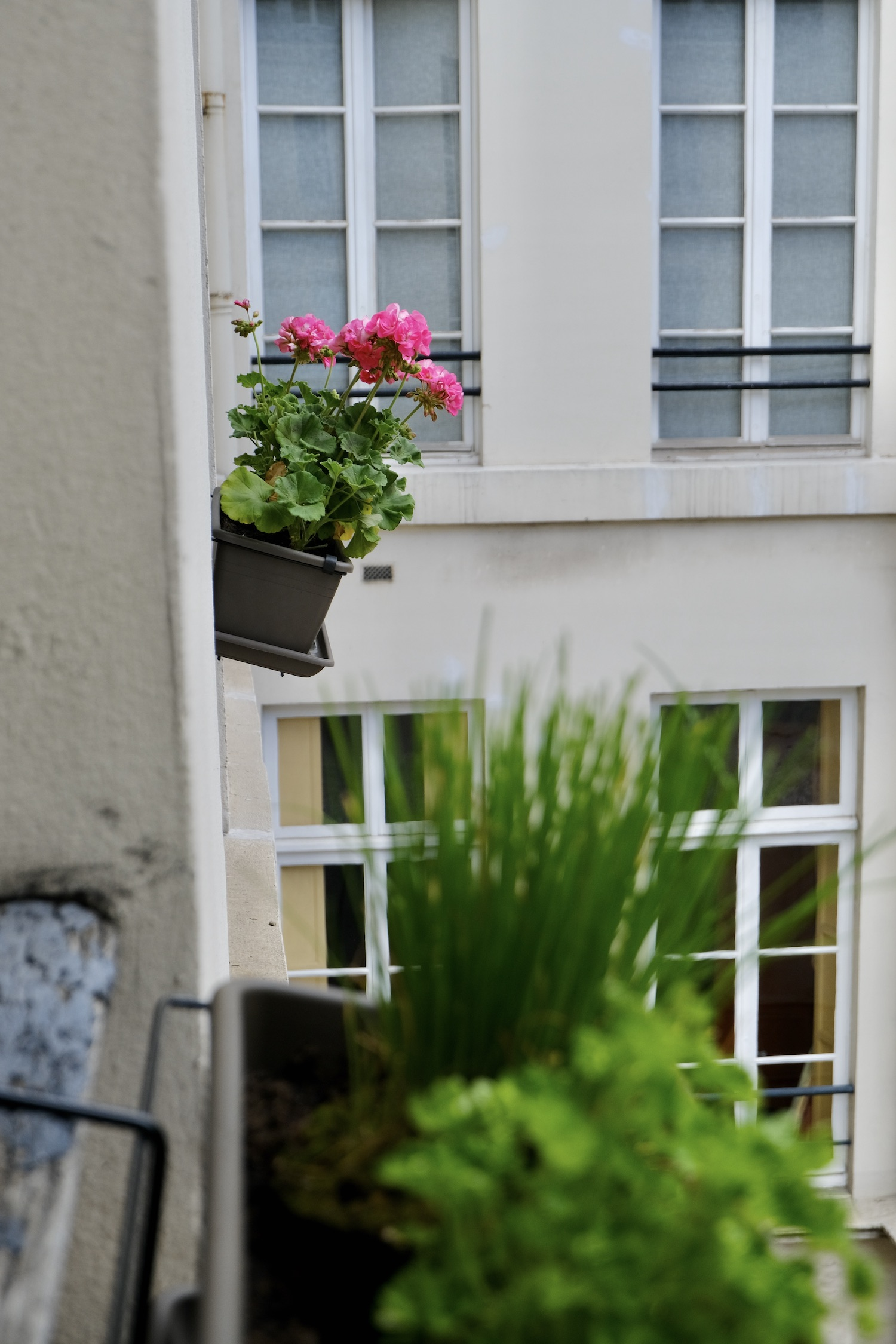 My Parisian Window Boxes Pink Geraniums and herbs