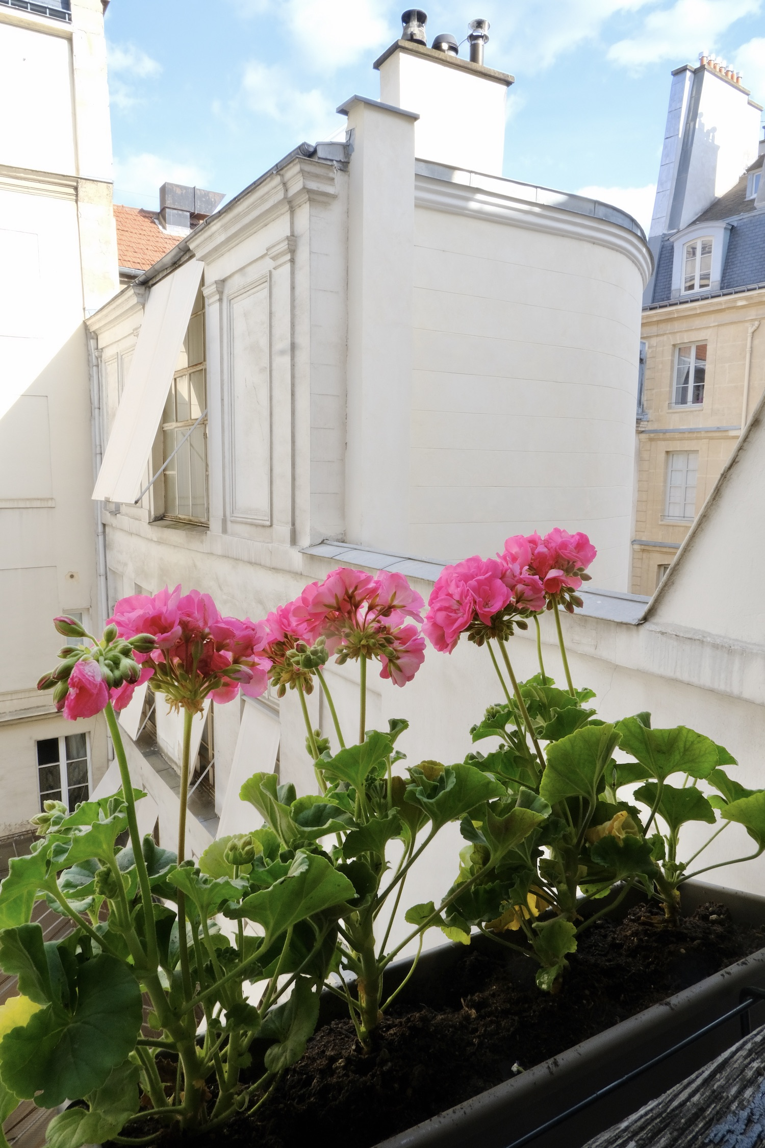 My Parisian Window Boxes with Pink Geraniums