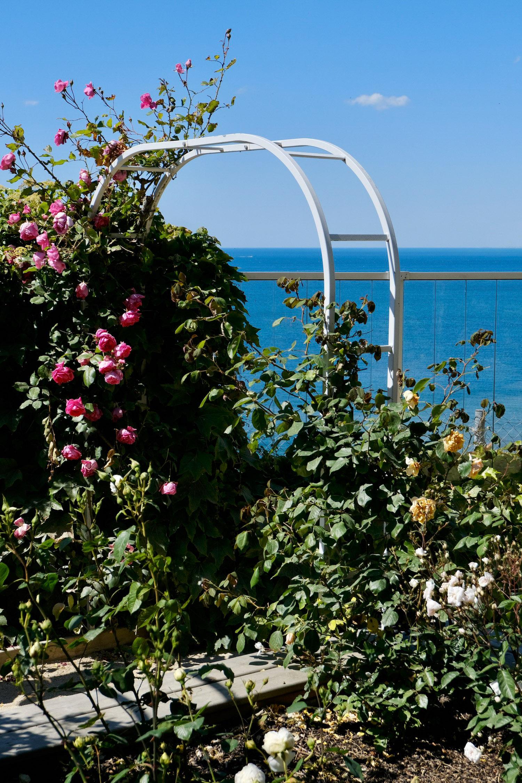 Musée Christian Dior rose garden