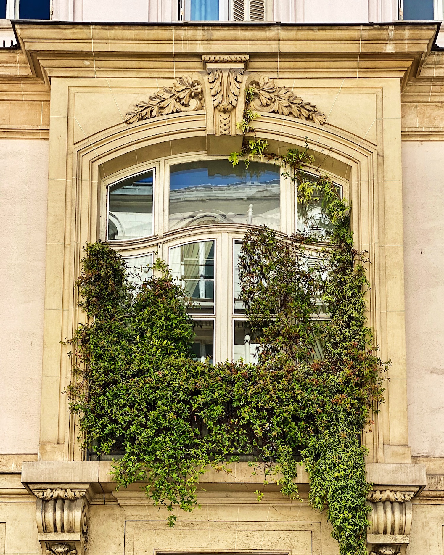 Five Friday finds from France Paris window with Palais Royal Roses