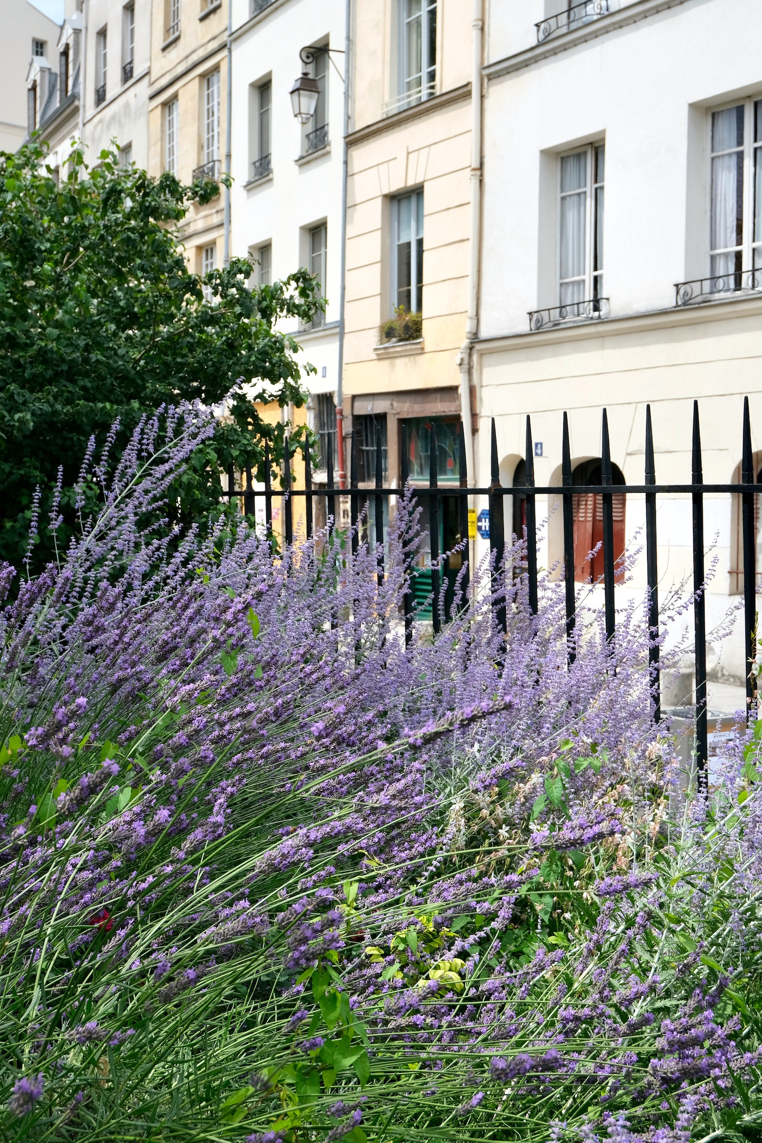 Provence in Paris: Where to See Lavender in Paris