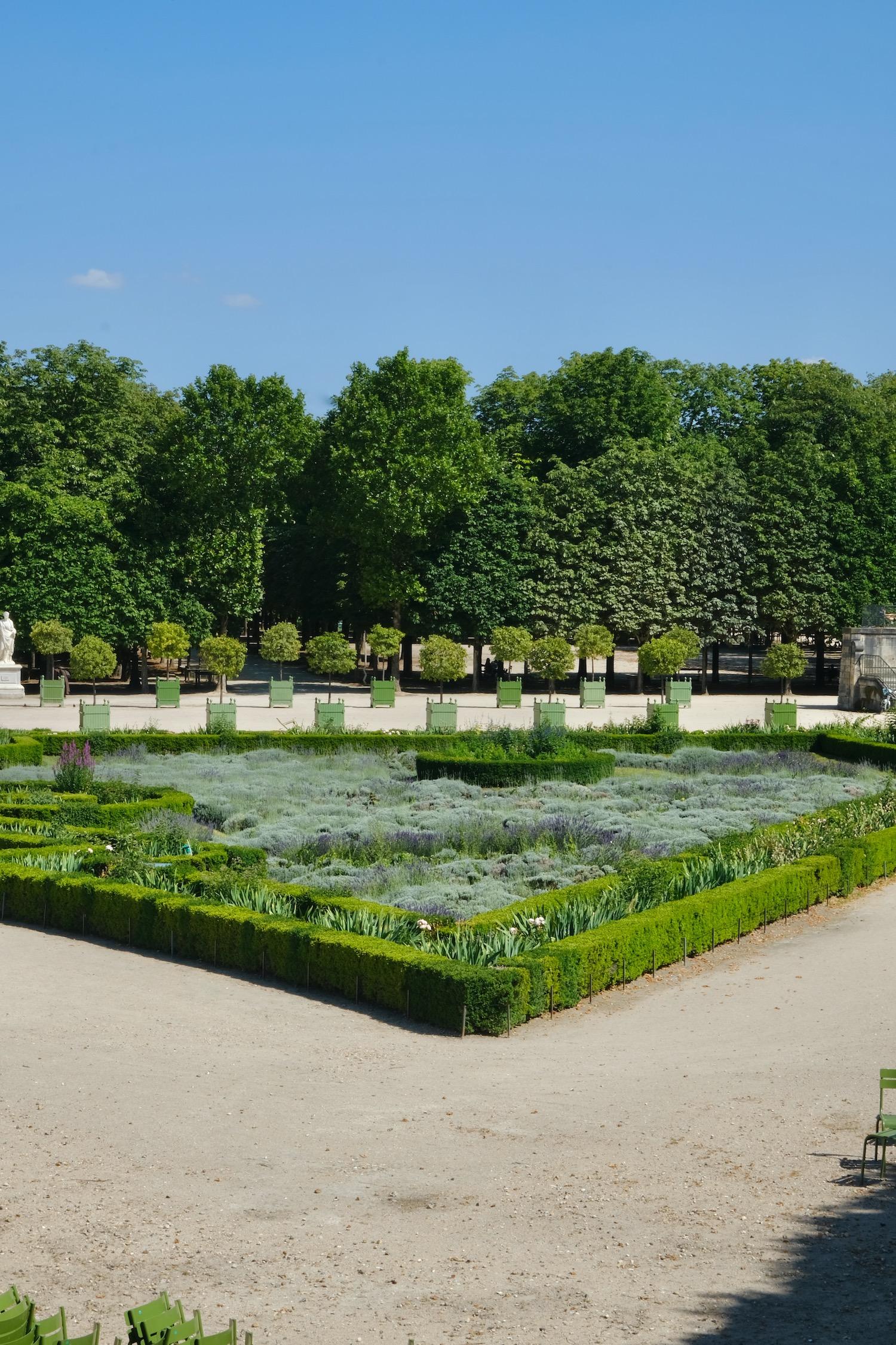 Tuileries lavender field