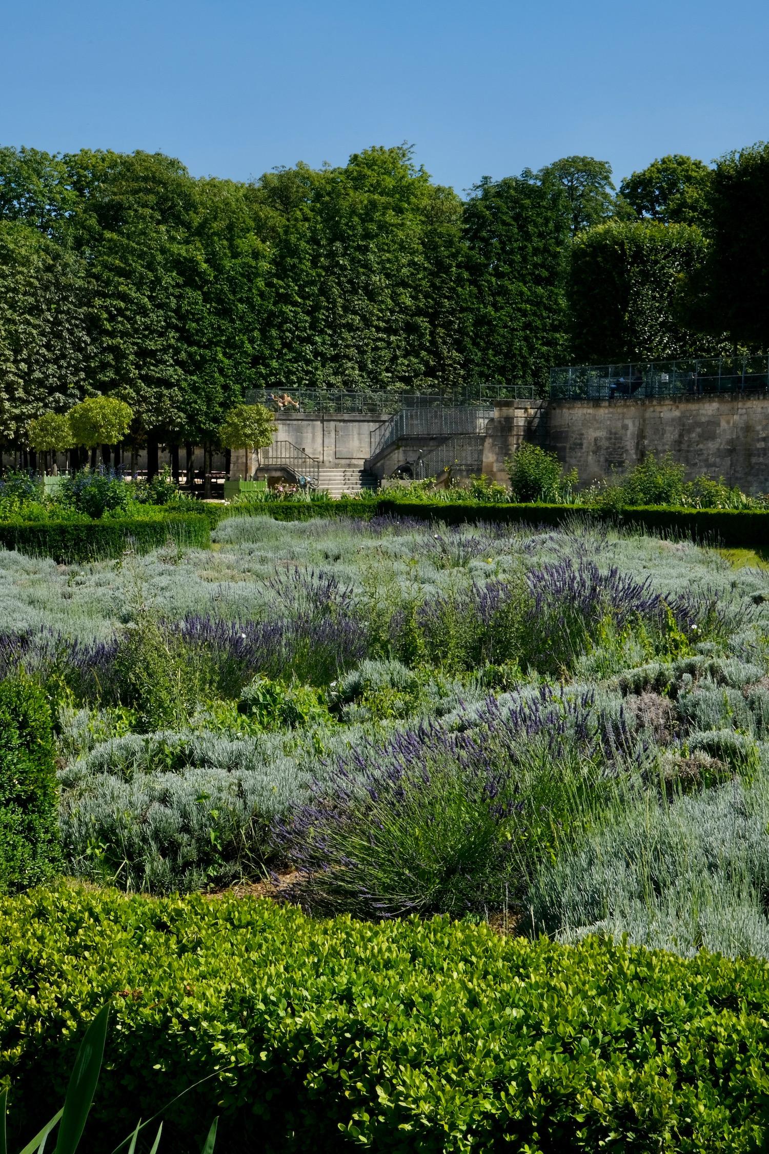 lavender field Paris