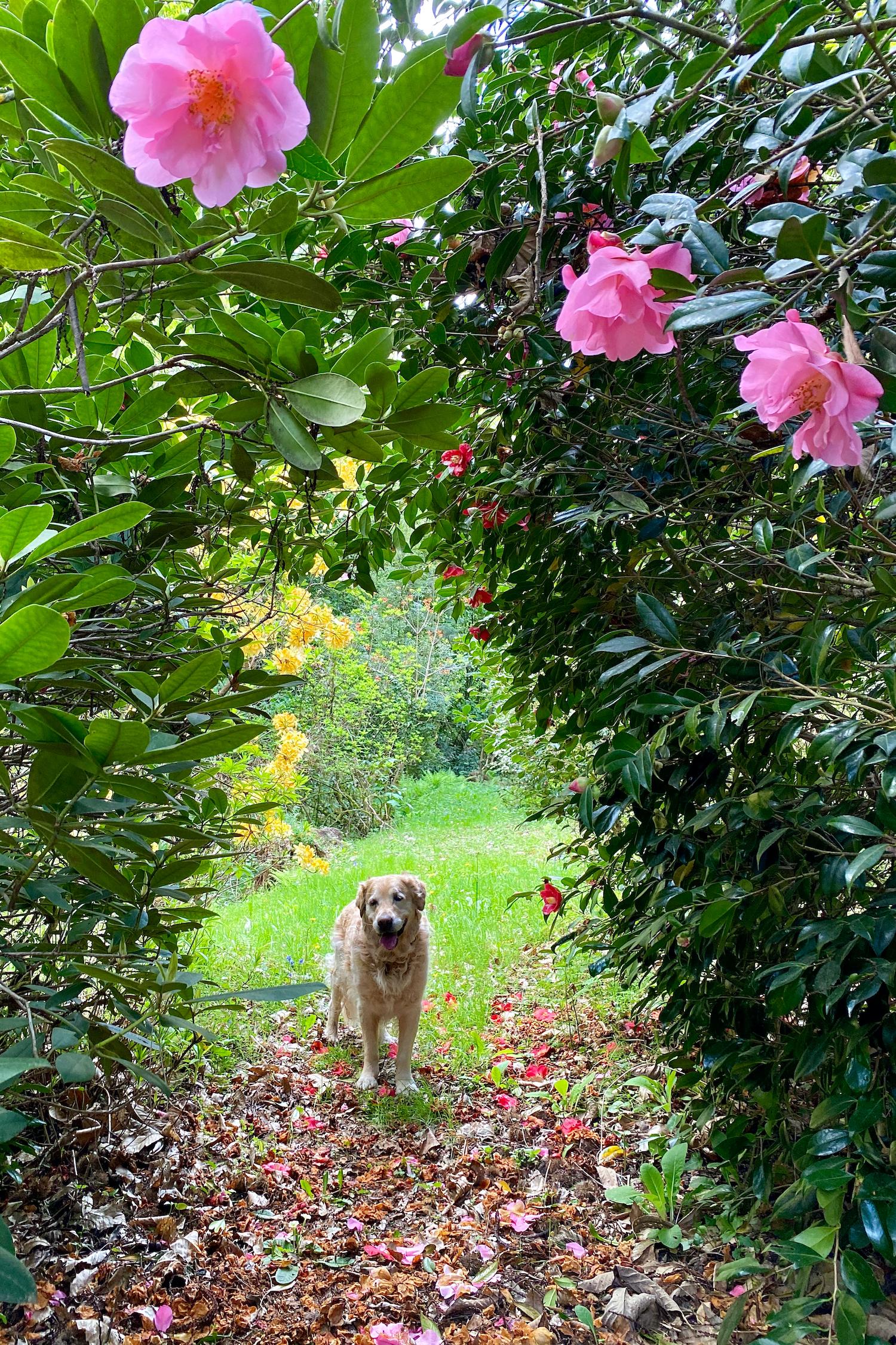 Dalton in the garden