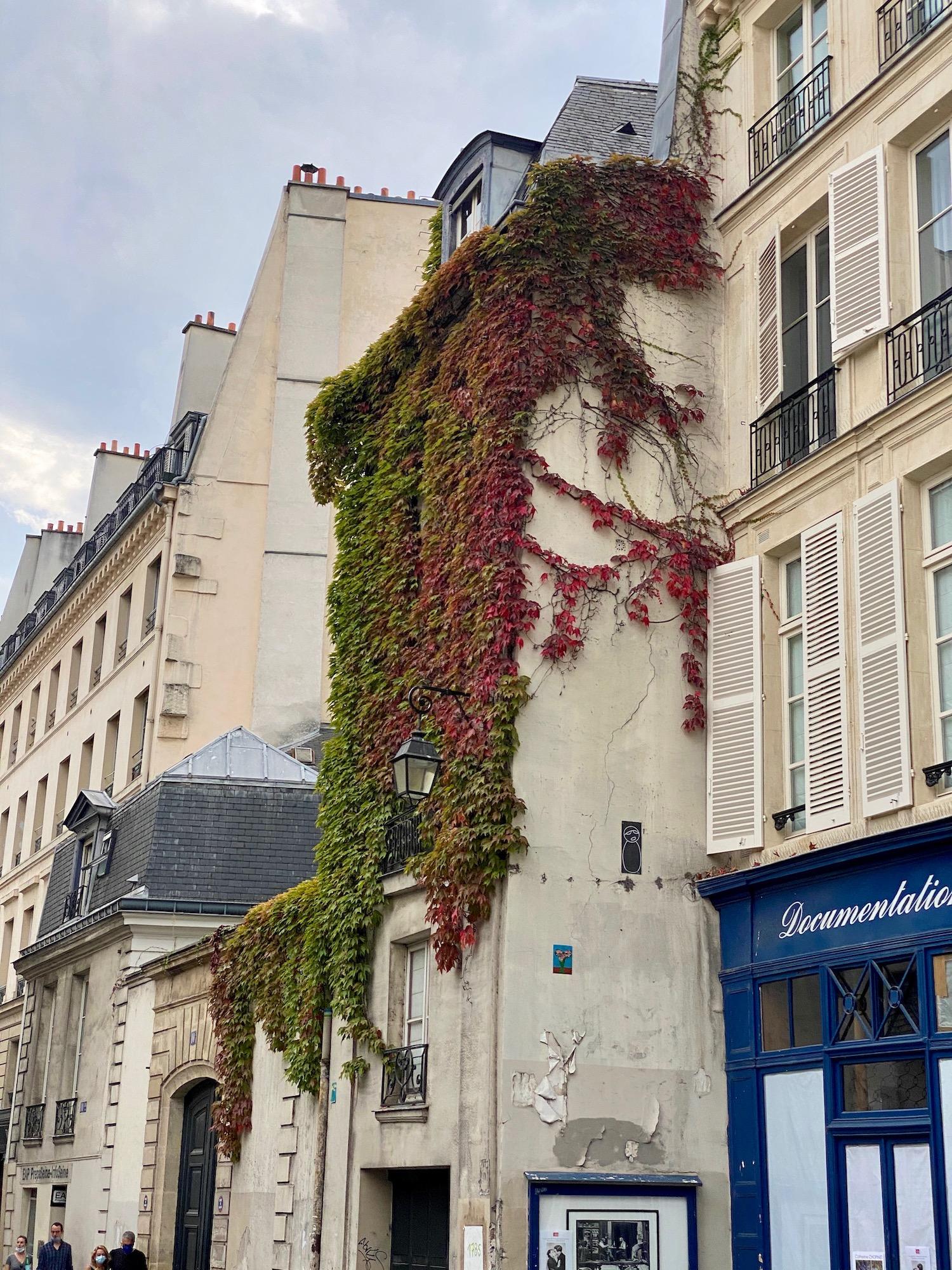 10 Rue de Seine ivy