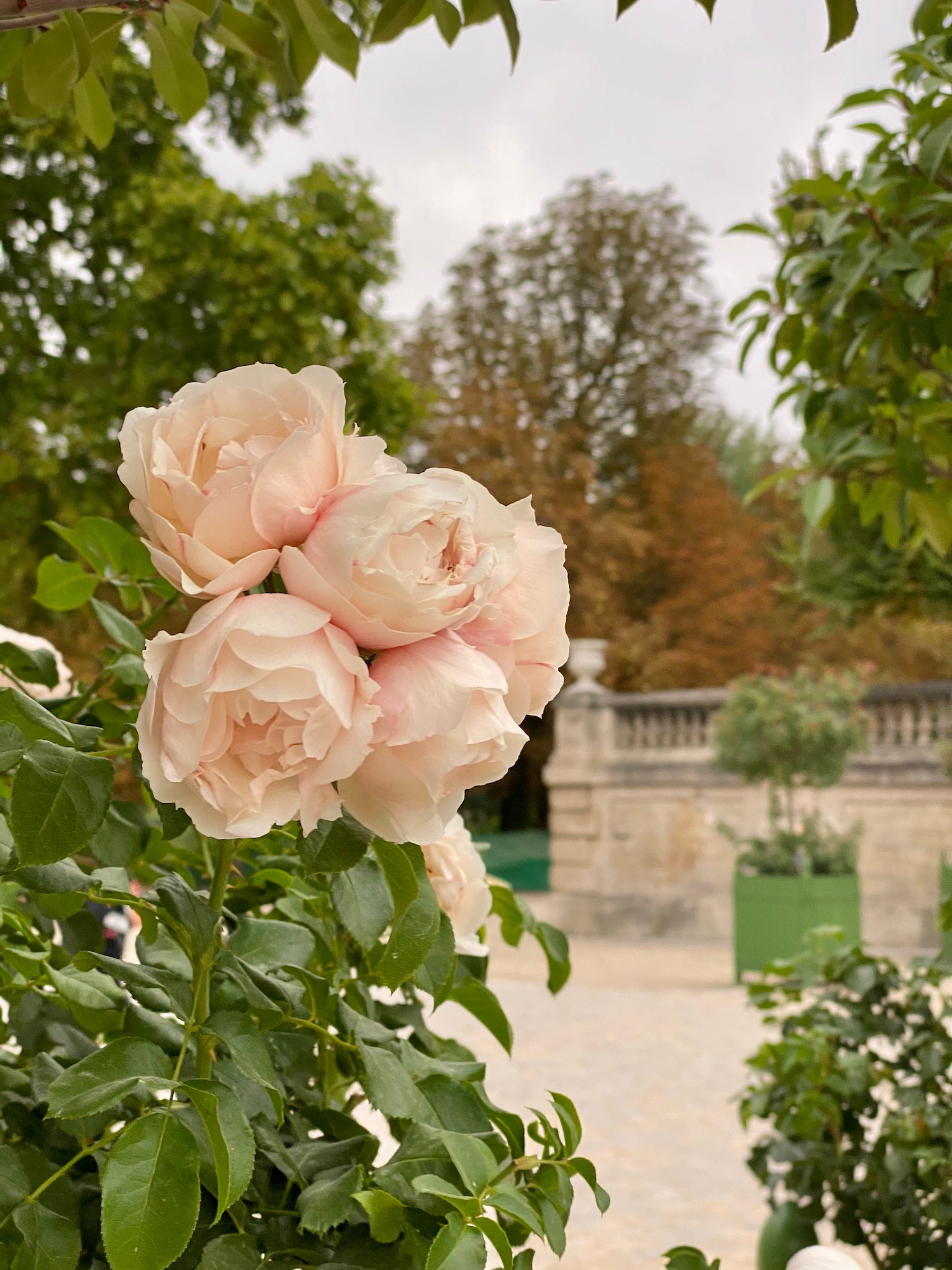 Tuileries flowers