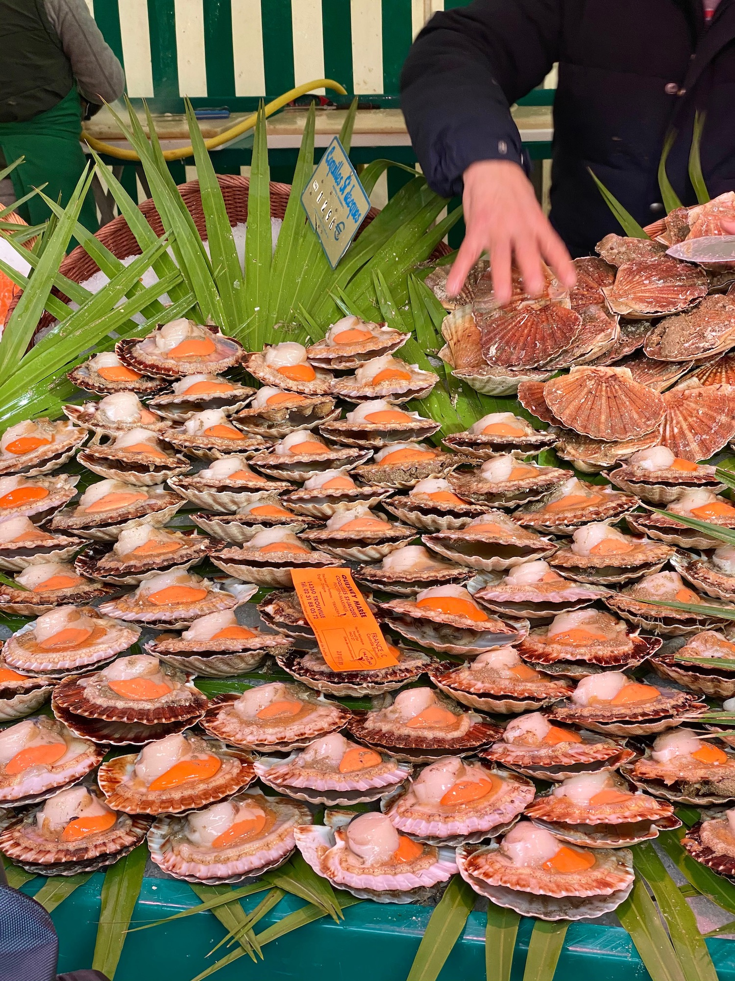 Coquilles Saint-Jacques at the Neuilly marché