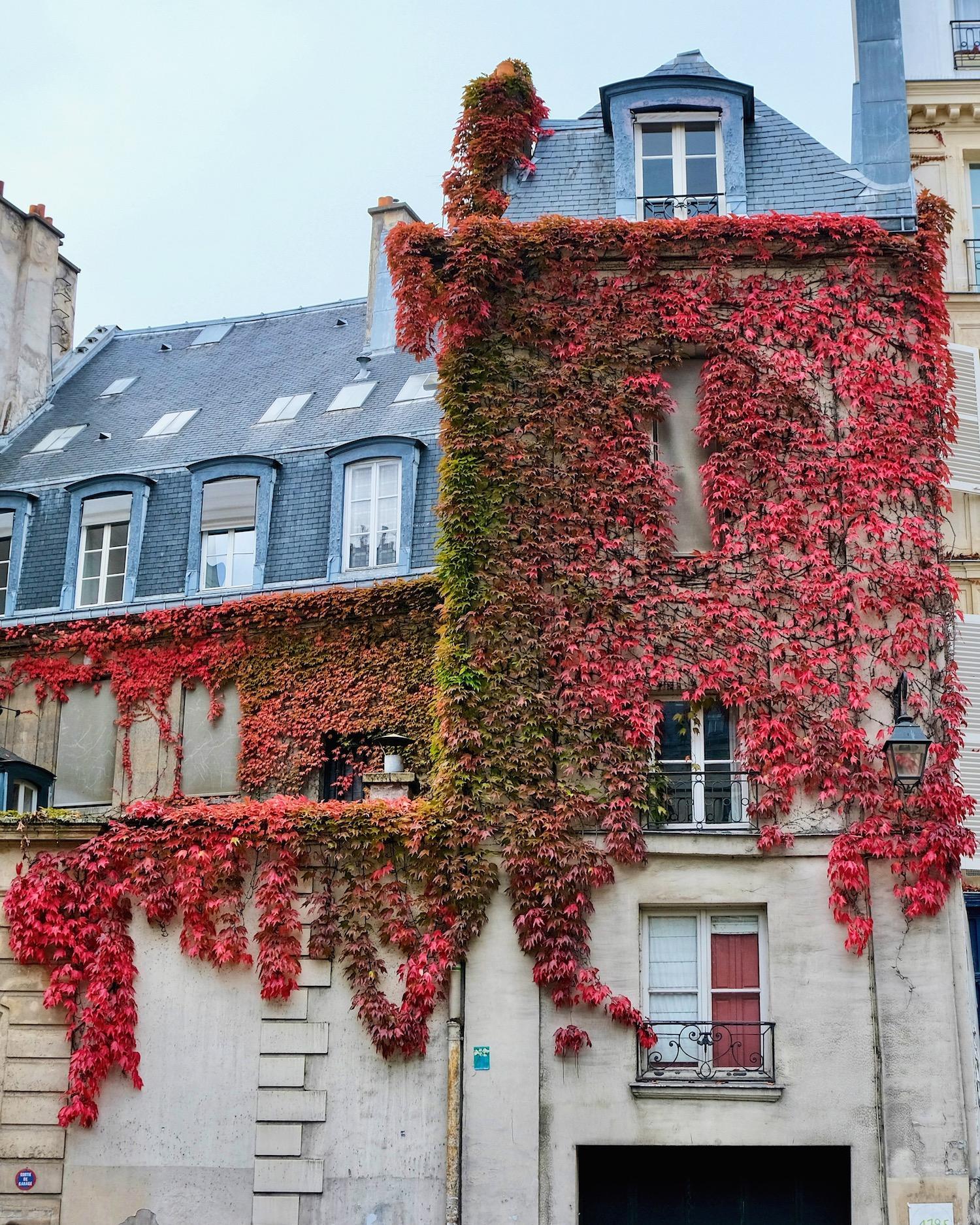 Fall leaves on Rue de Seine