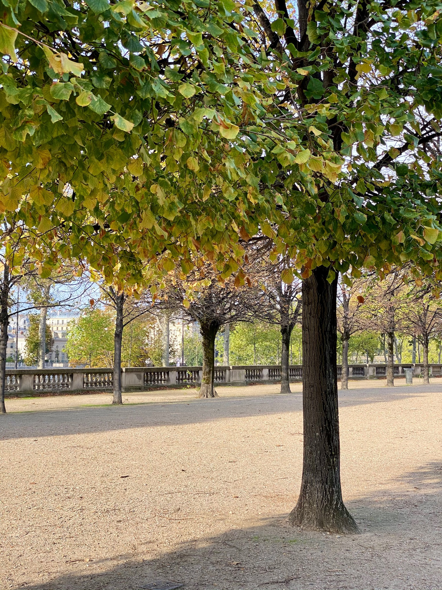 Fall in the Jardin des Tuileries