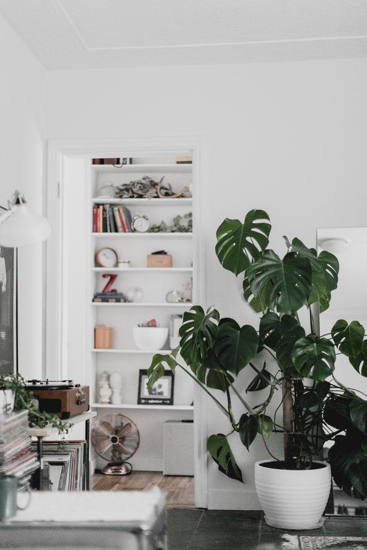 Interior houseplants to buy according to Vogue Paris
