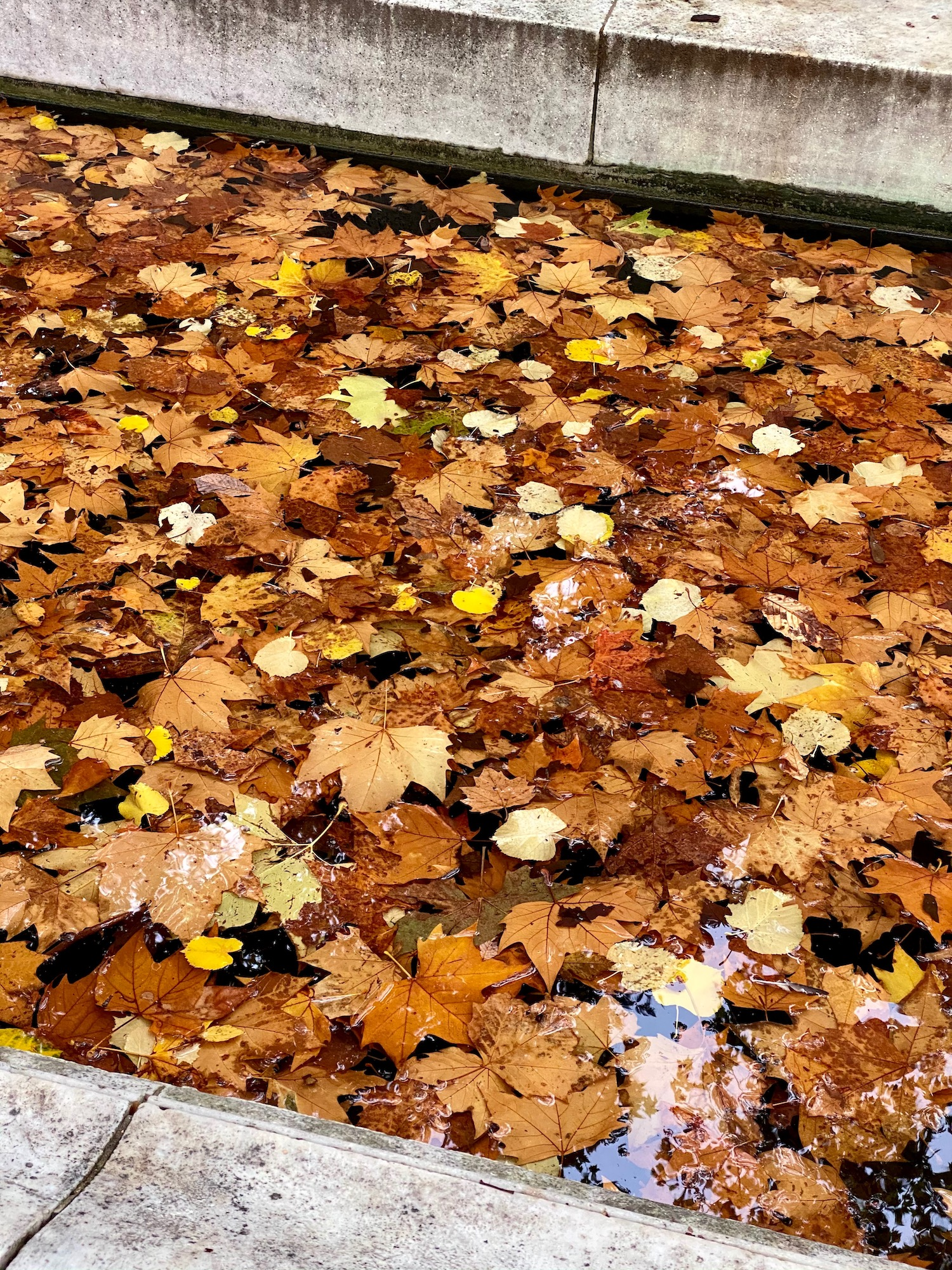 fall leaves in a fountain