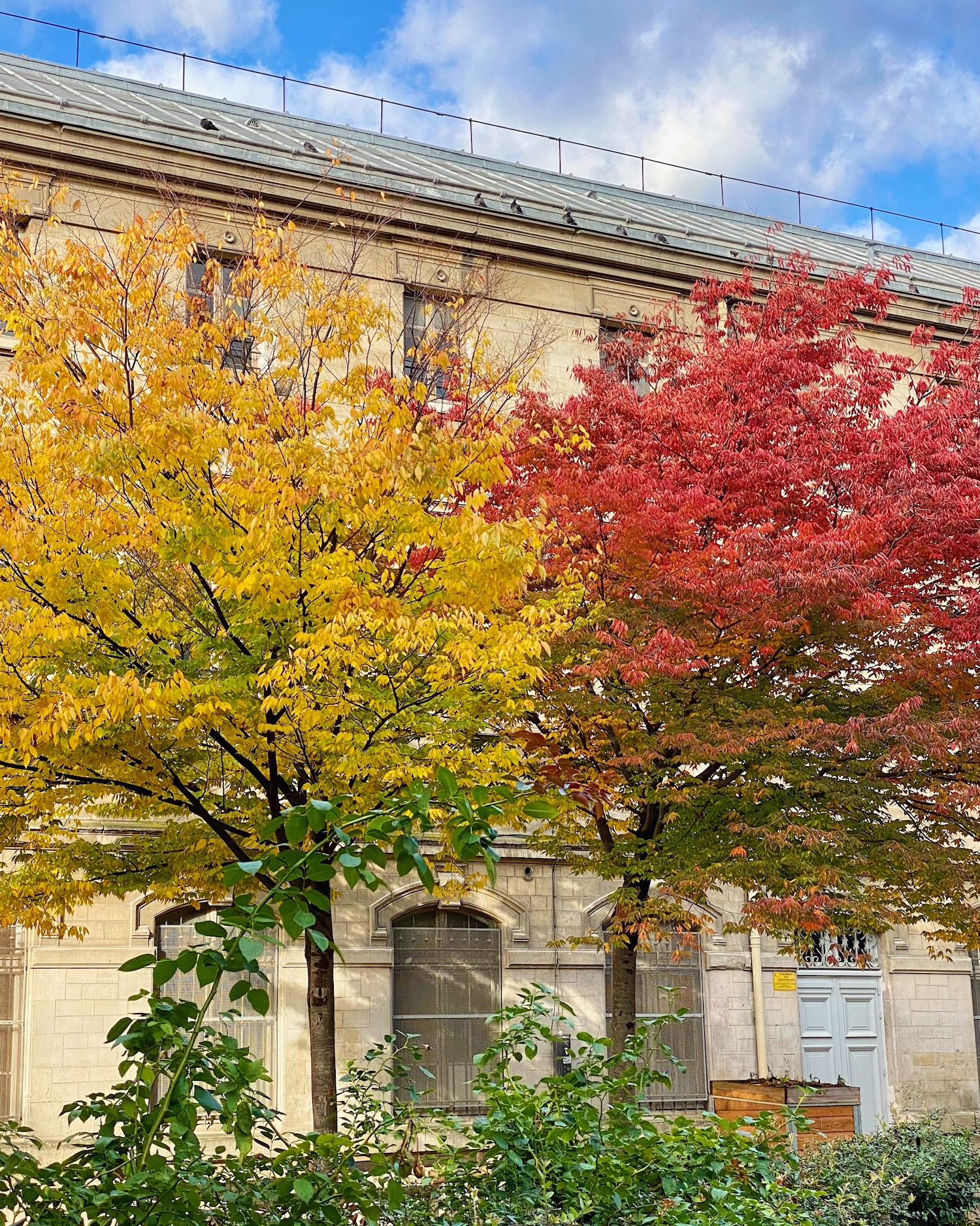 yellow and red fall trees in paris