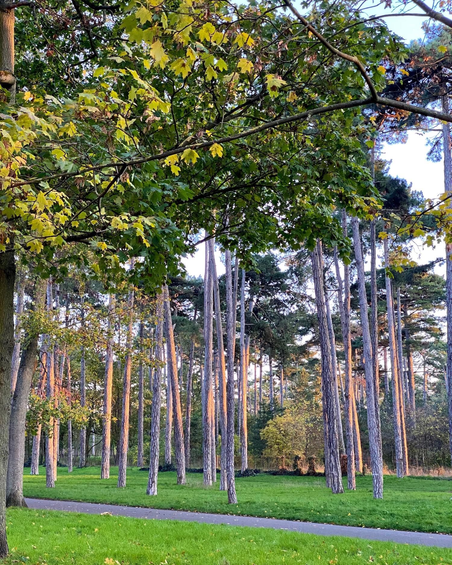 Bois de Boulogne light