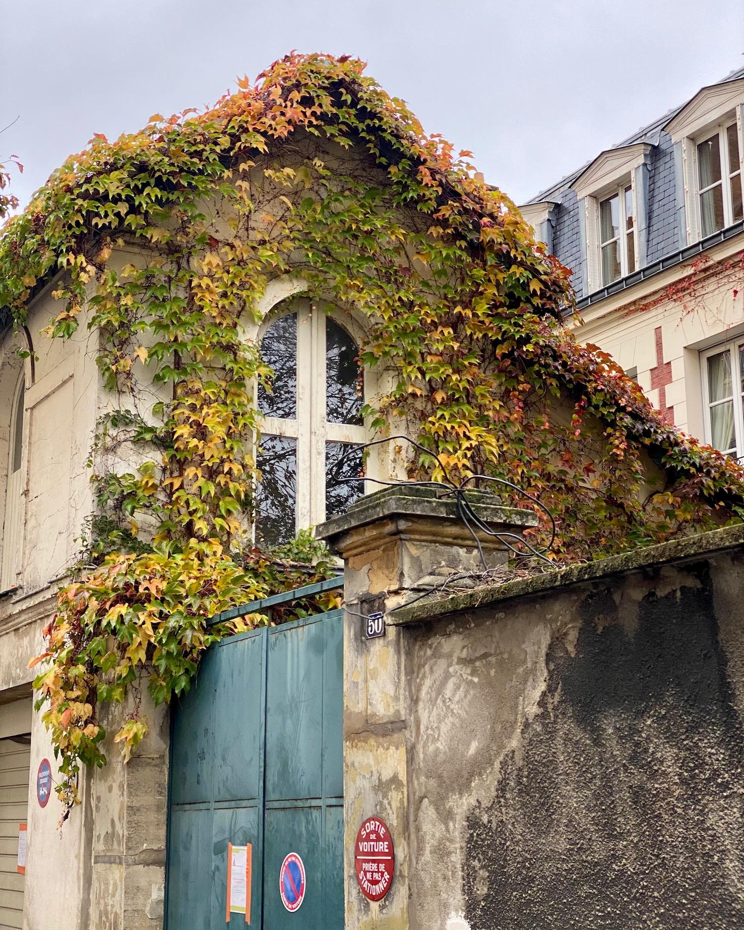 Ivy Neuilly sur Seine