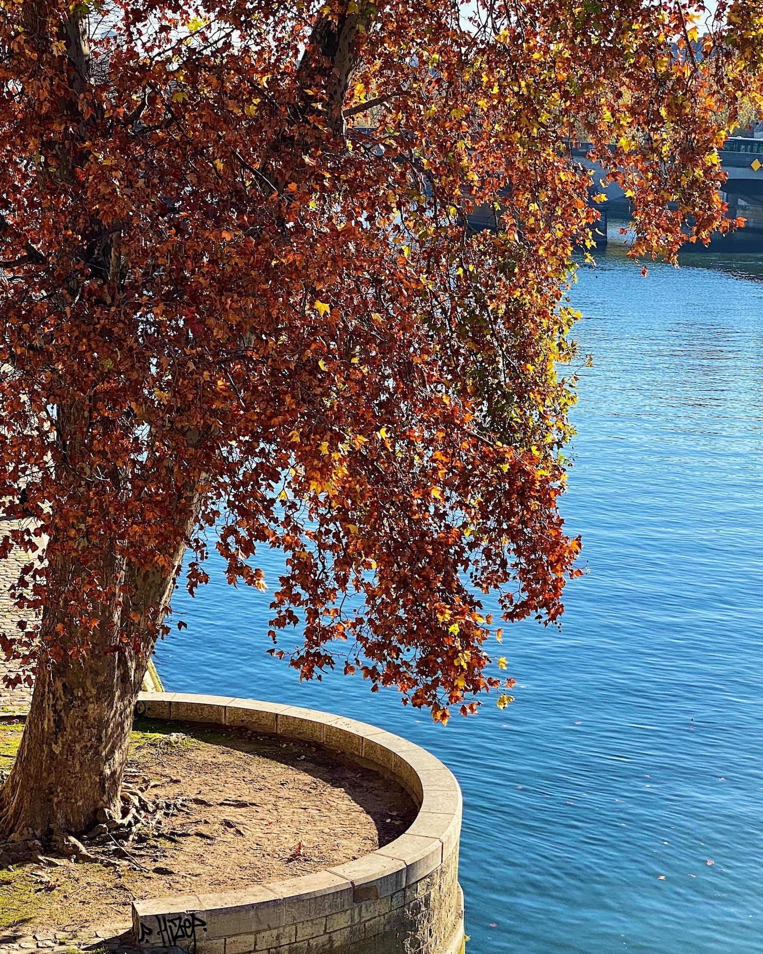 Fall tree by the Seine