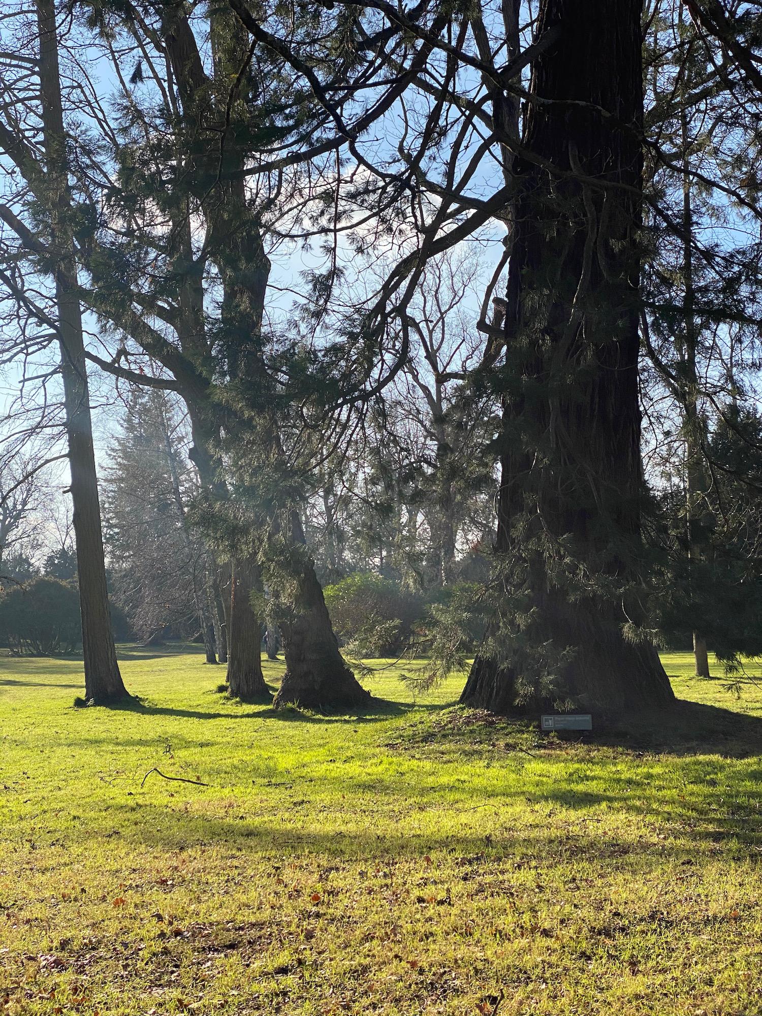 english garden château de fontainebleau