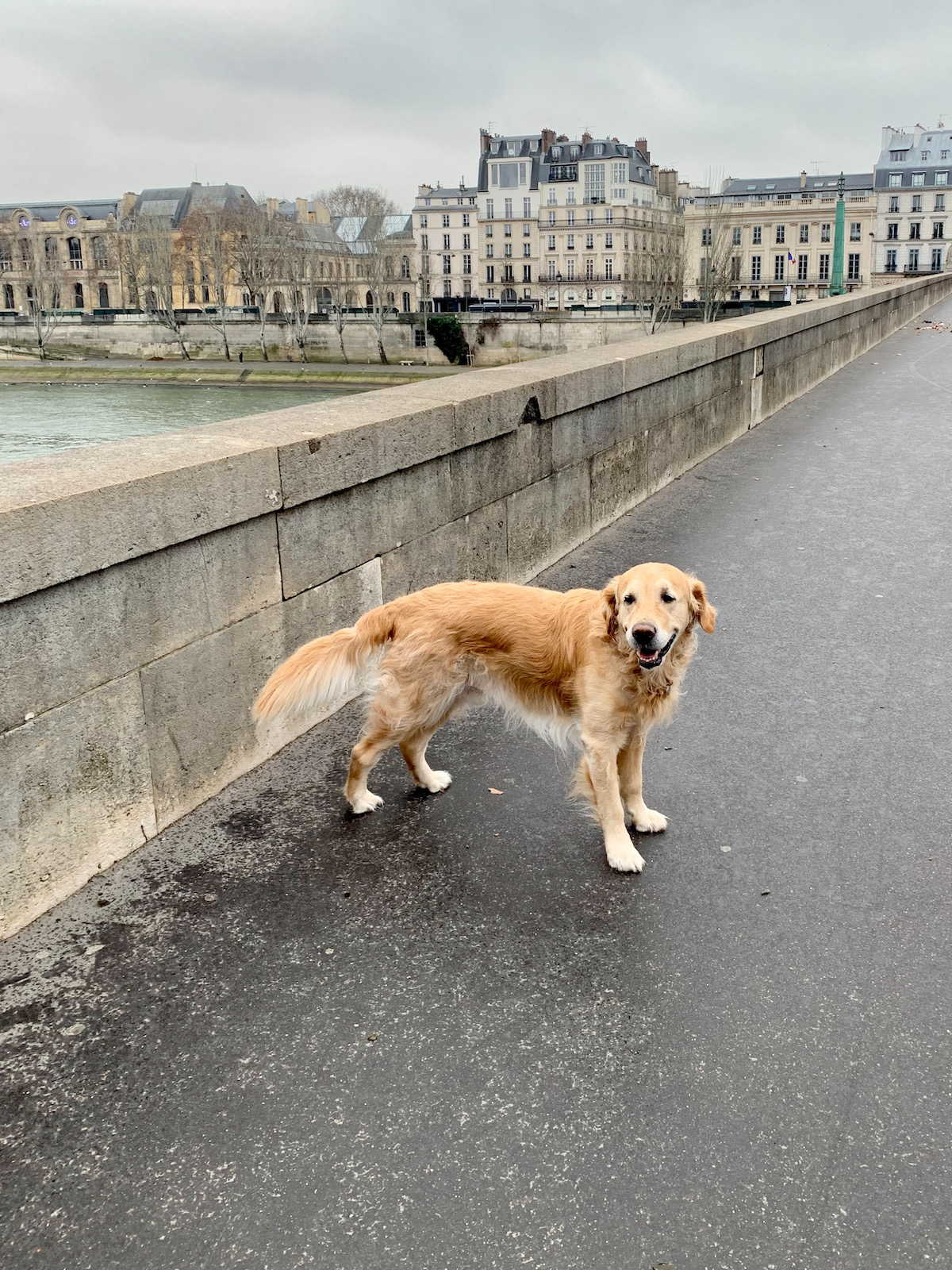 dalton on pont du carrousel