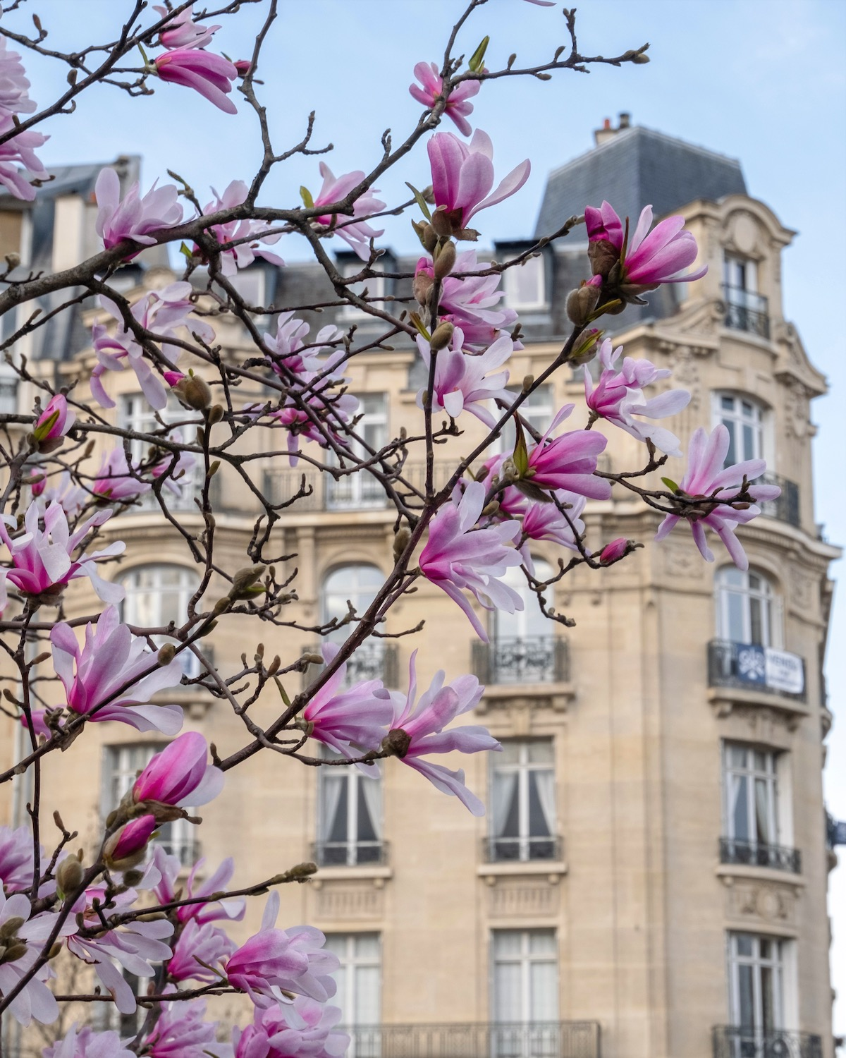 pink magnolias on the avenue print. five friday finds from france featuring le creuset herb planters, the riviera cocktail book and more
