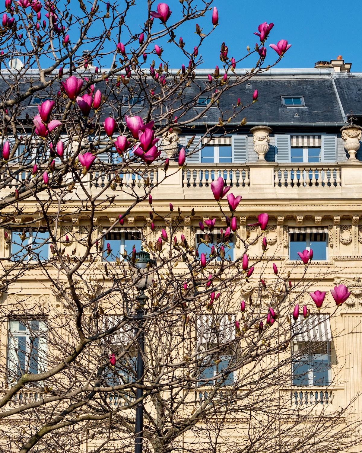 palais royal magnolias featuring the hotel magique for anthropologie glasses