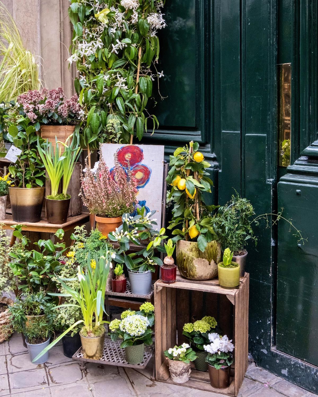 rue des saints-peres flowers
