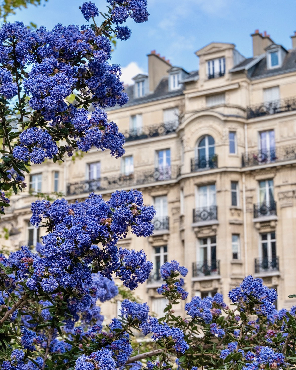 weekend links week 16 california lilac in paris