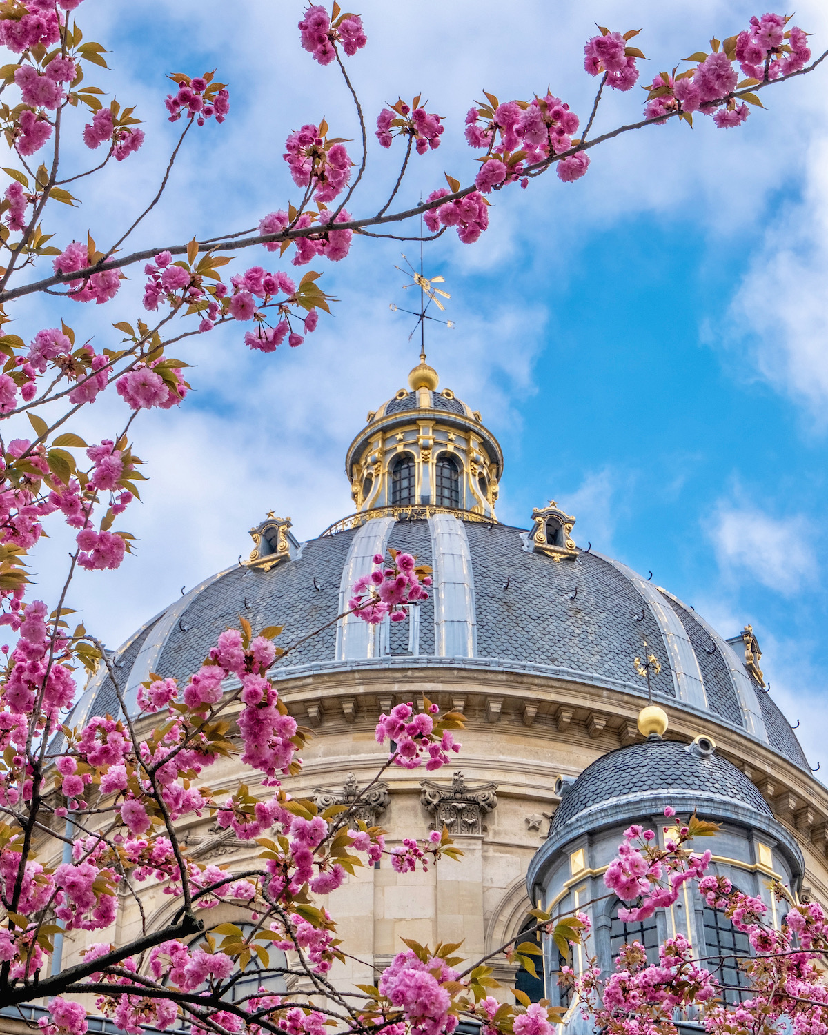 institut de france cherry blossoms. five friday finds from france features the new provence glory book and french summer straw totes
