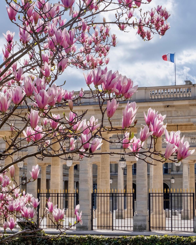 palais royal magnolias