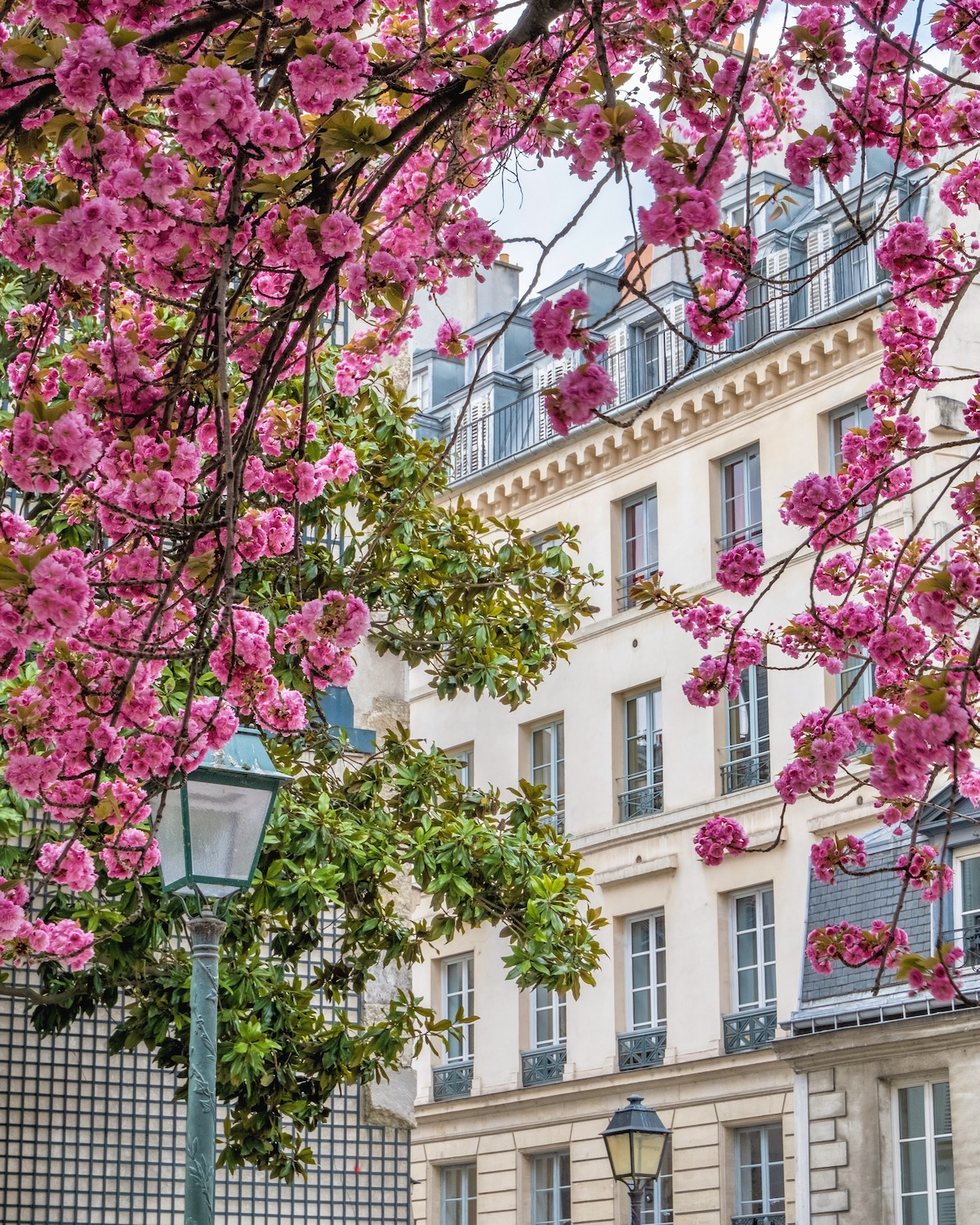 weekend links april in paris cherry blossoms
