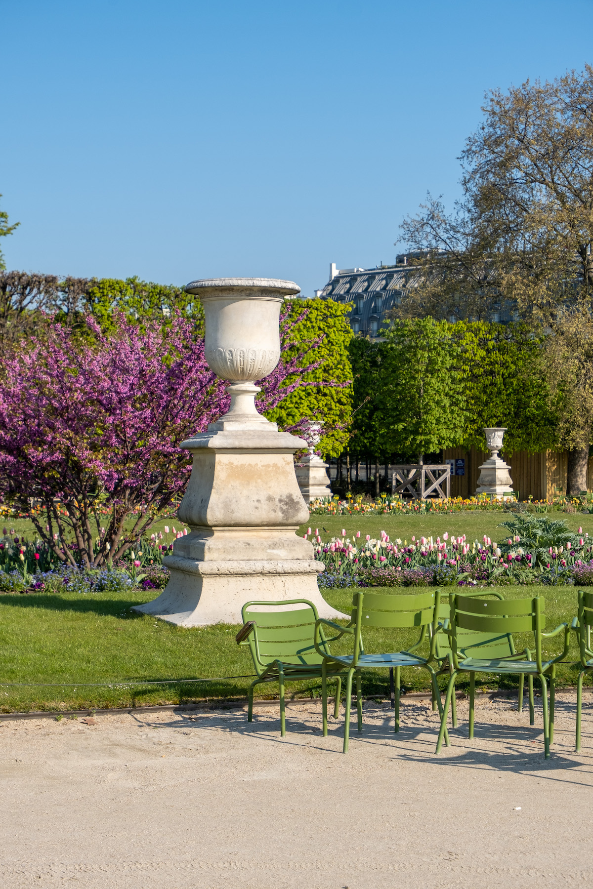pink trees in the tuileries