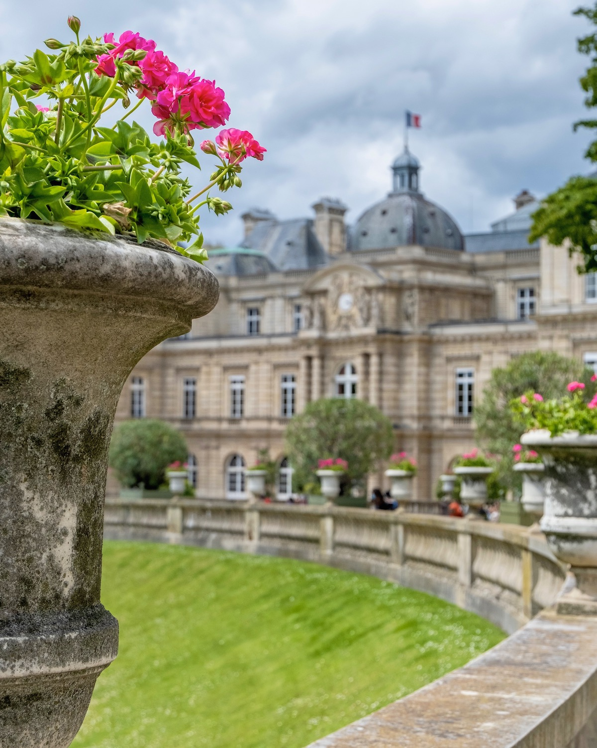 jardin du luxembourg pink geraniums