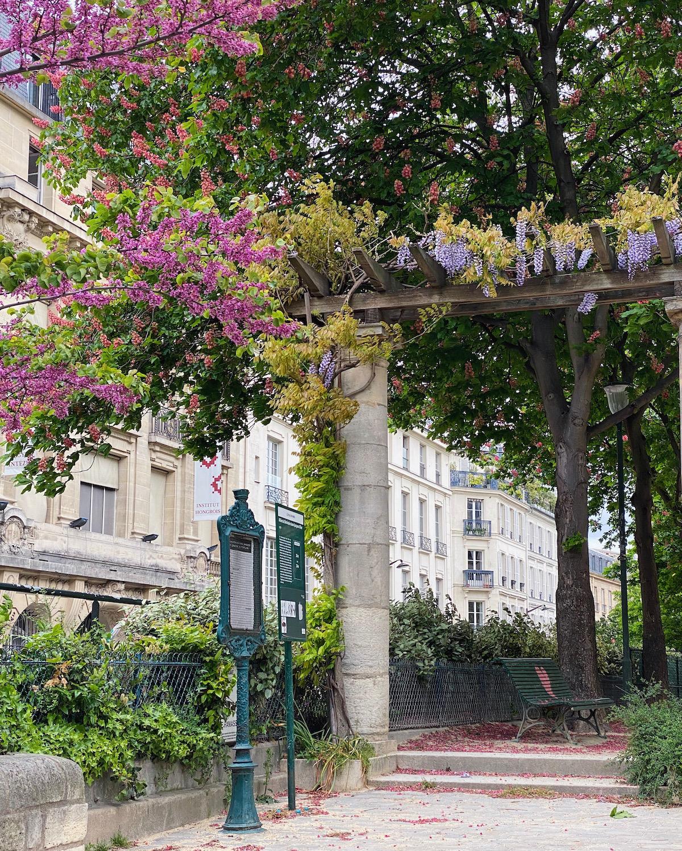 paris wisteria and judas tree