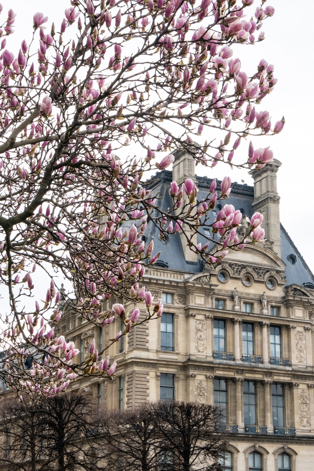 pink magnolias and the louvre print