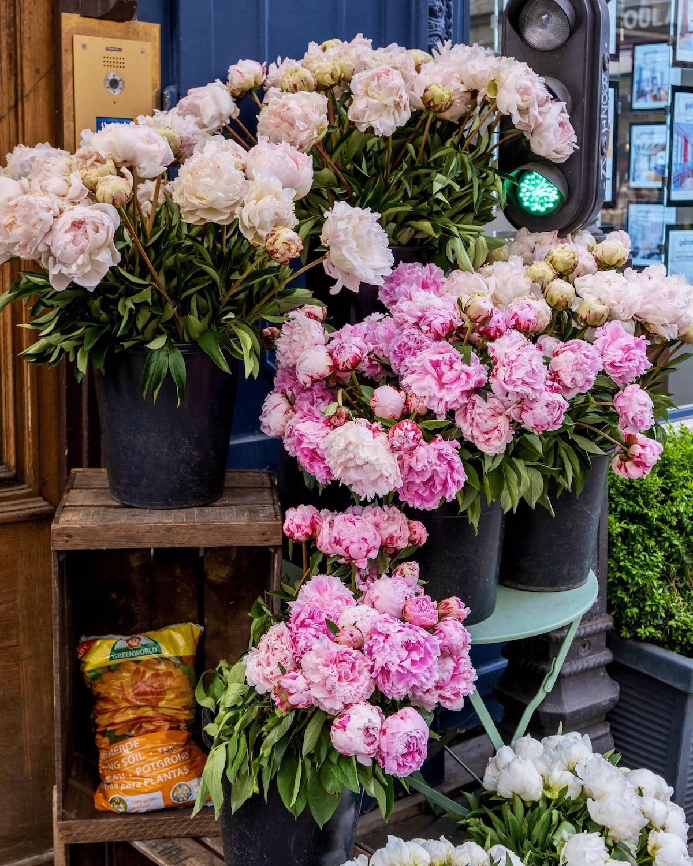 pink peonies in paris
