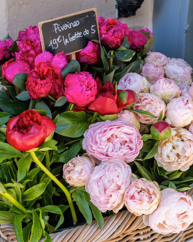 weekend links week 20 pink peonies in paris