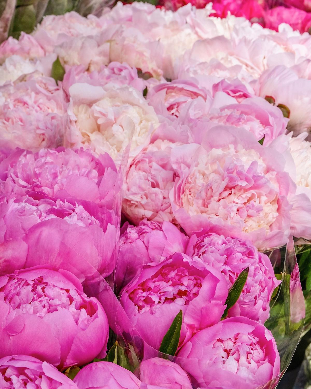 weekend links rue du bac pink peonies featured