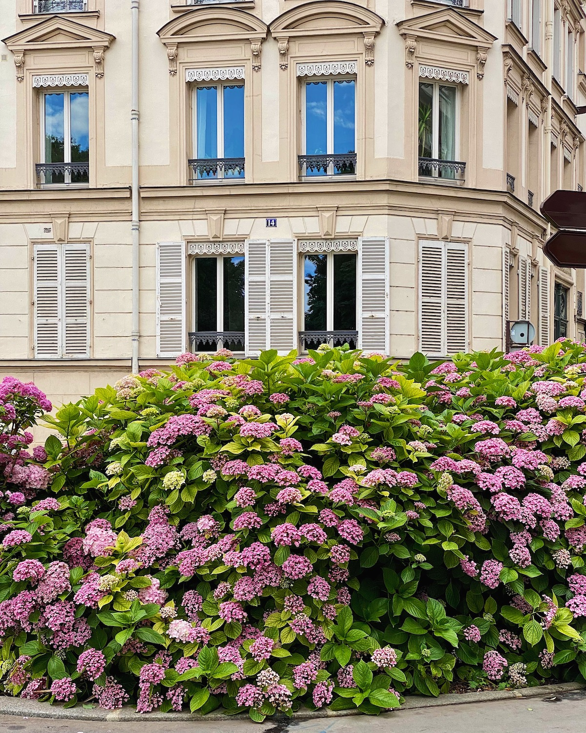 hydrangeas in neuilly. five friday finds from france feauring tomatoes at marché des sablons in neuilly.
