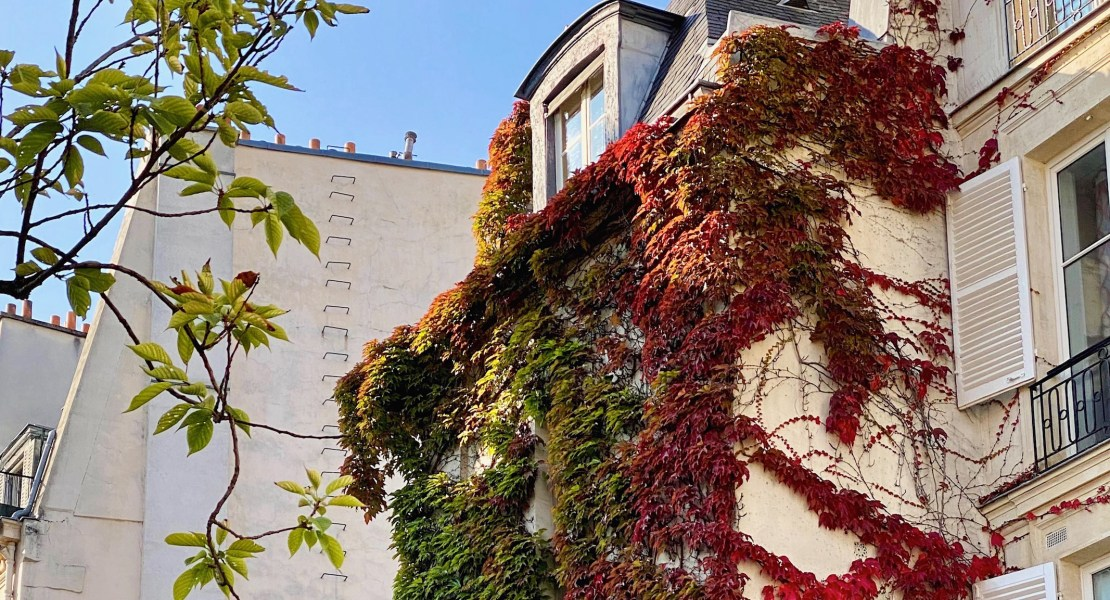 ivy on the left bank. in paris