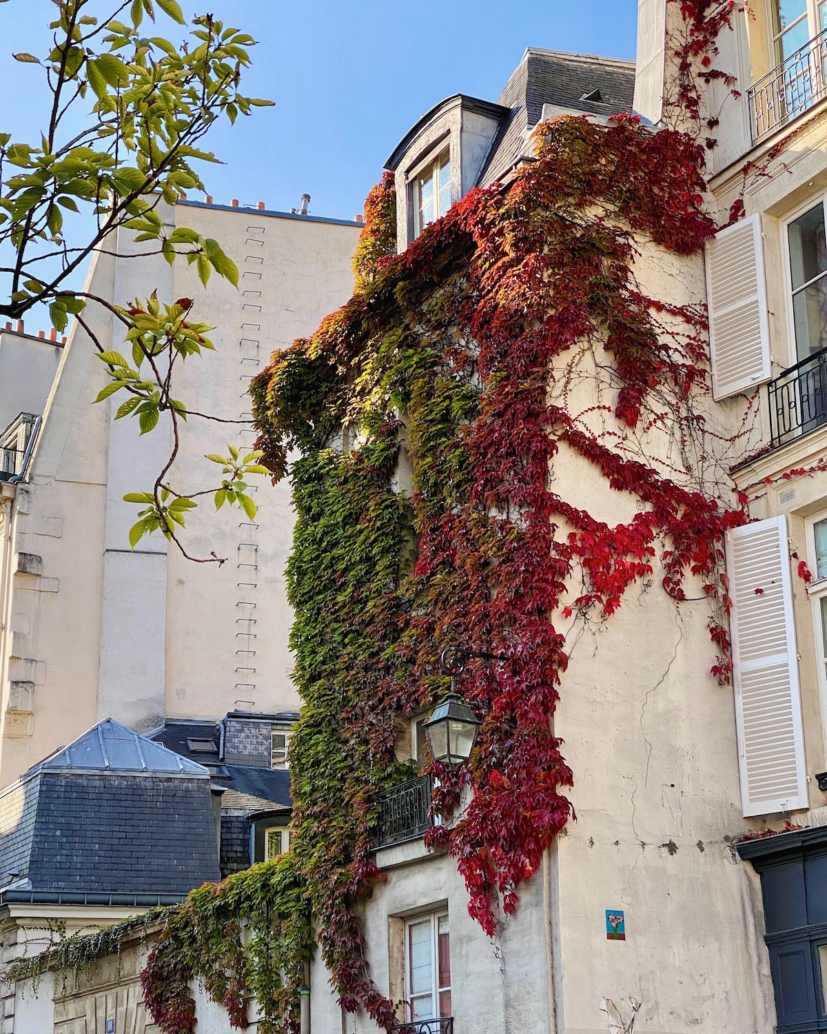ivy in paris on the left bank. five friday finds from france featuring nathalie lete anthropologie french holiday decor